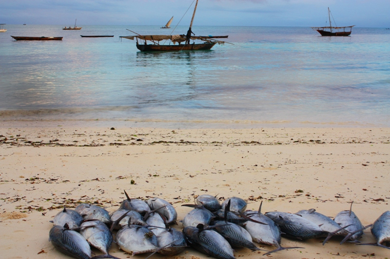 091216 Zanzibar Fish Catch