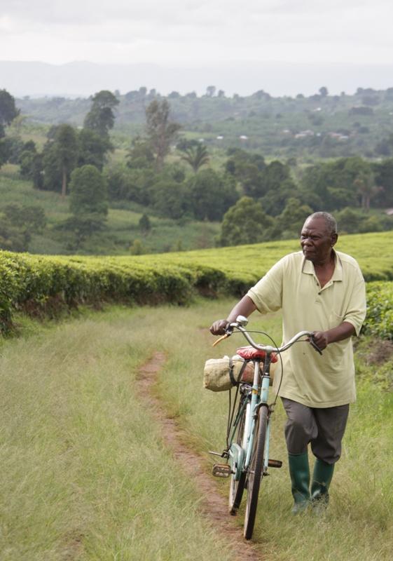 091222 Tea Plantation man Tanzania