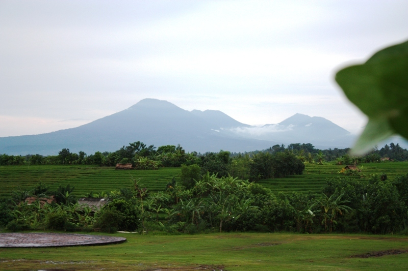 Bali - Fields