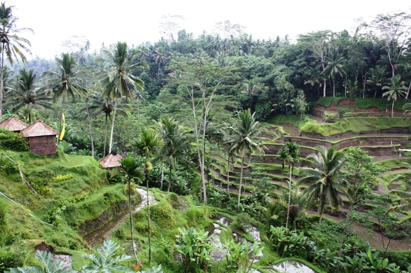 Bali - Terraced Rice Fields 2