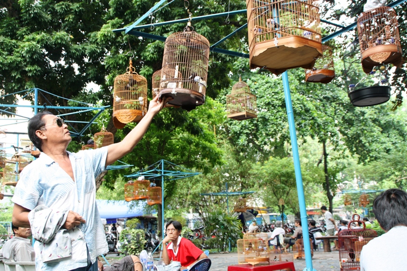 Songbirds of Vietnam - Arranging cages at Tao Dan park - JP