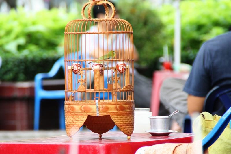 Songbirds of Vietnam - bird park