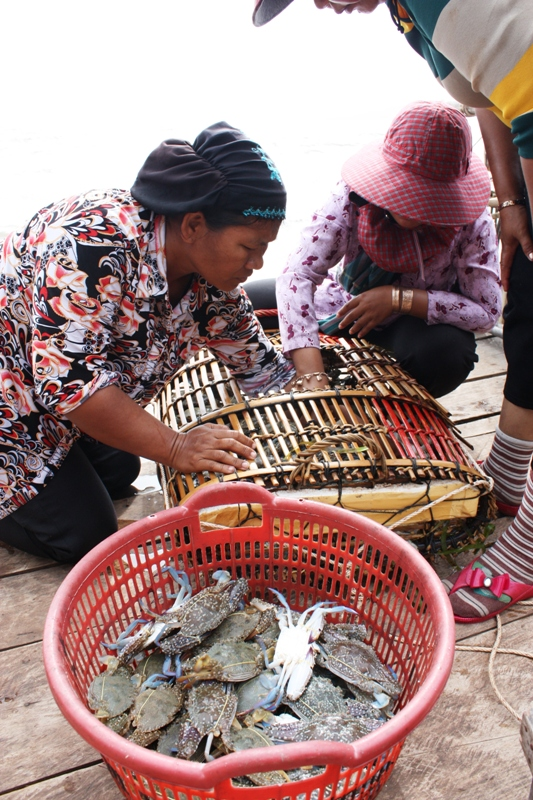 38b Kep crabs