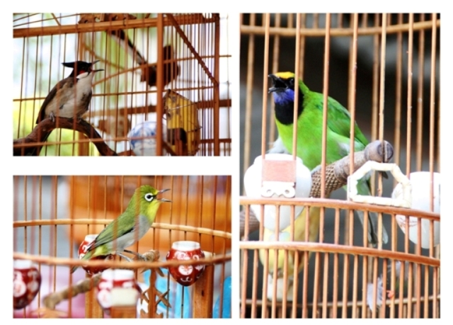 birds should not be kept in cages essay