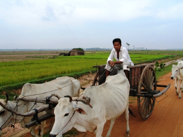 My name is Soksay. I'm a Cambodian oxcart driver.