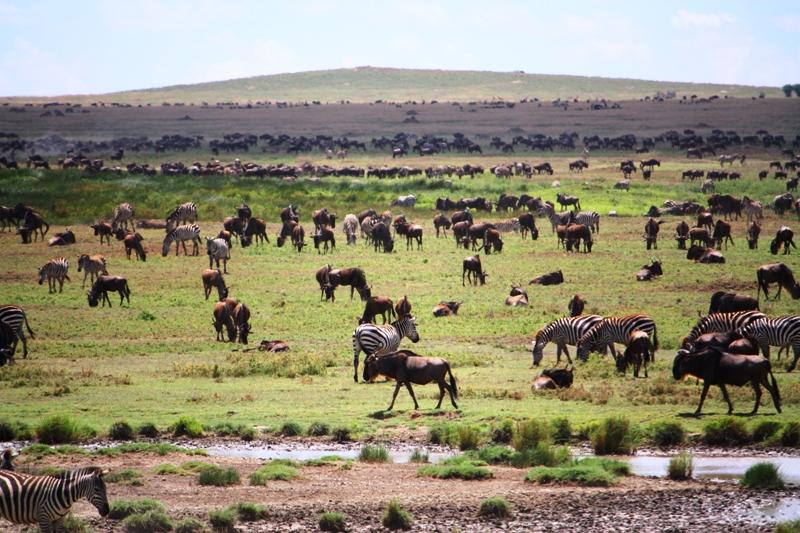 091210 Serengeti Migration