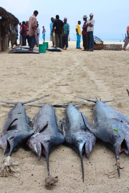 091216 Zanzibar Fish Auction Sailfish a