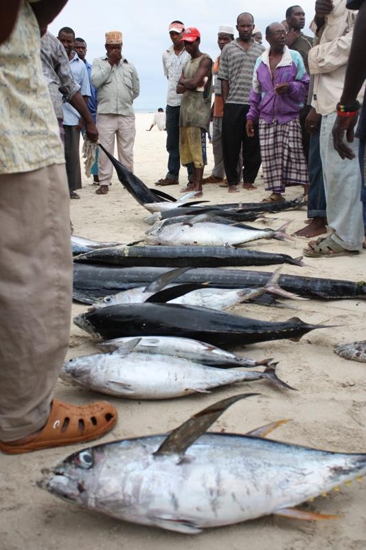091216 Zanzibar Fish Auction