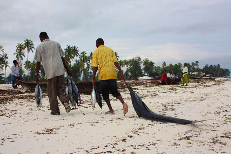 091216 Zanzibar Fish Catch 3