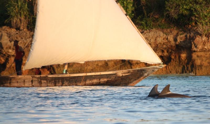 091216 Zanzibar Nungwi Dolphins 3