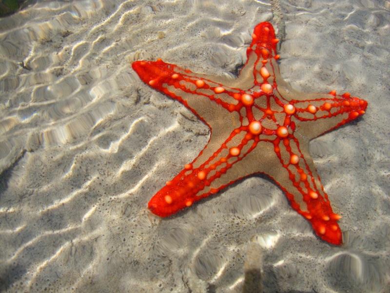 091216 Zanzibar Starfish