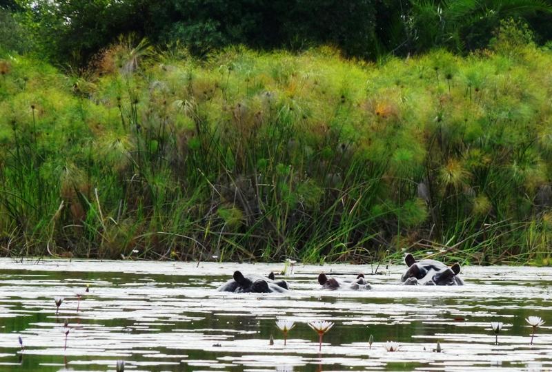100111 Hippo lagoon