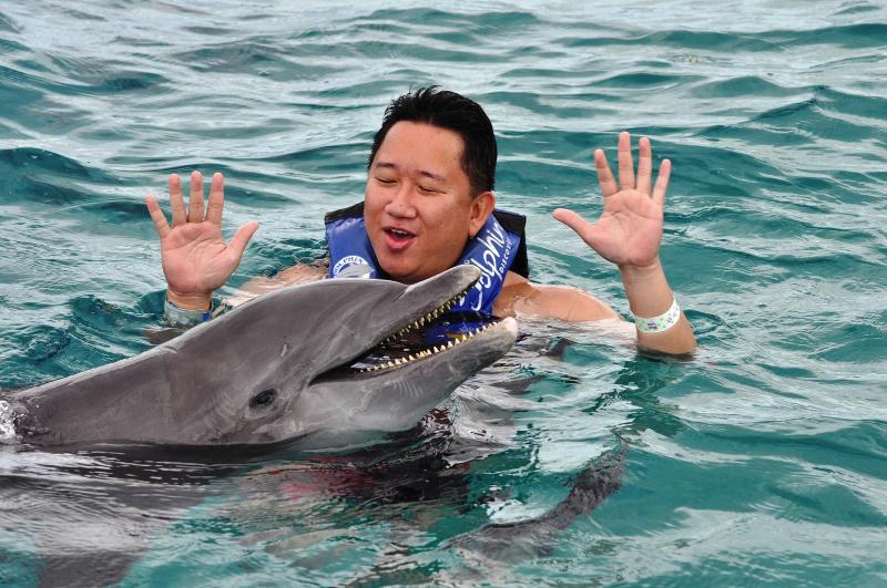 Dolphin Teeth