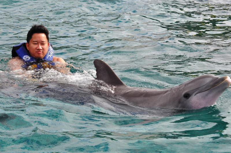 Dolphin petting