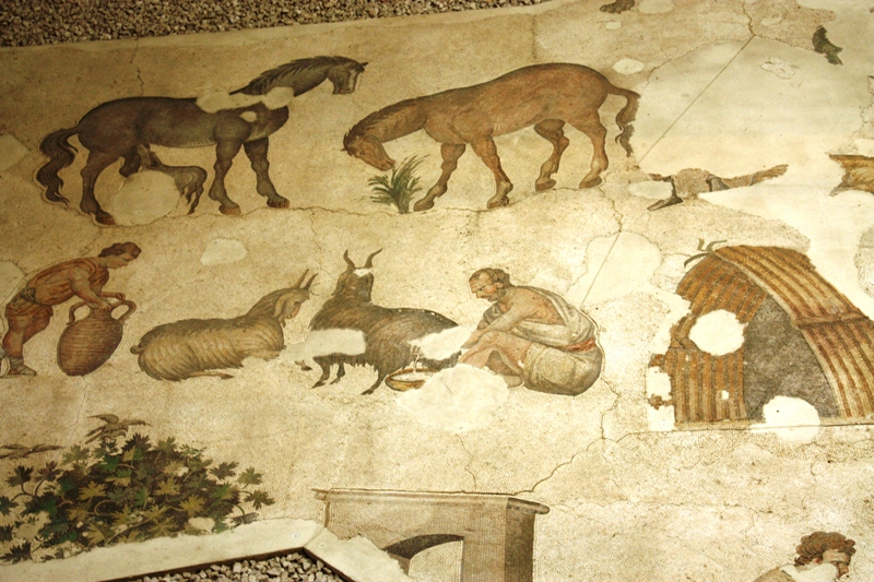 Mosaics Museum Tessalated Floor
