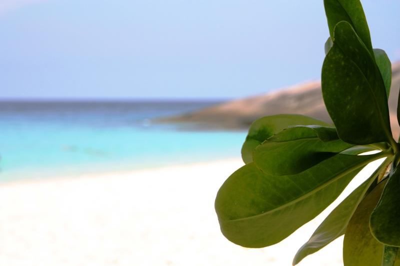 Similan - Island 4 - Leaf