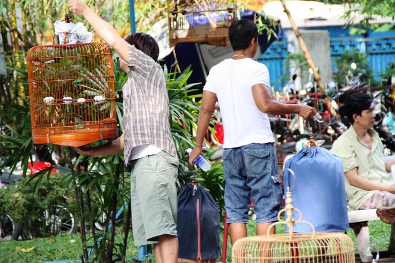 Songbirds of Vietnam - Arriving