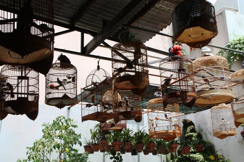 Songbirds of Vietnam - Bird Cafe