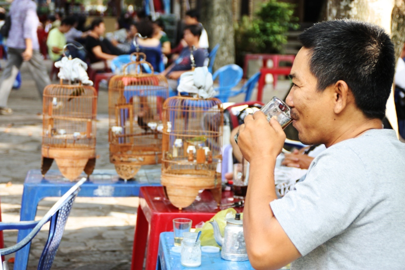 Songbirds of Vietnam - Birds and coffee at Tao Dan park - JP