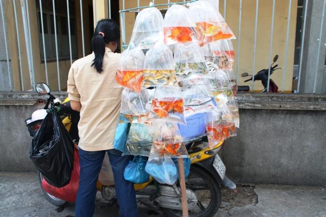 Mobile Fish Shop