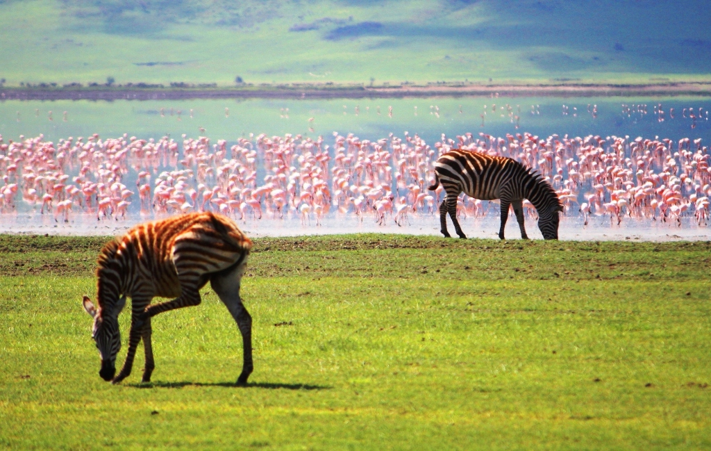 Panoramic - 2009 1211 Ngogogoro Crater Zebras Flamingos
